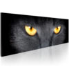 Canvas Print : Look into my eyes... HQ prints